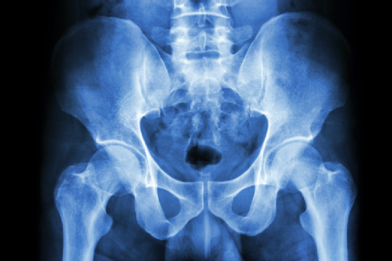 human's pelvis and hip joints